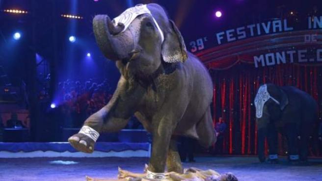 Actuación de un elefante en un circo asiático.