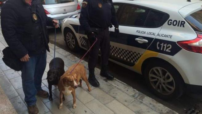 Los perros que han sido recogidos por la Policía Municipal.