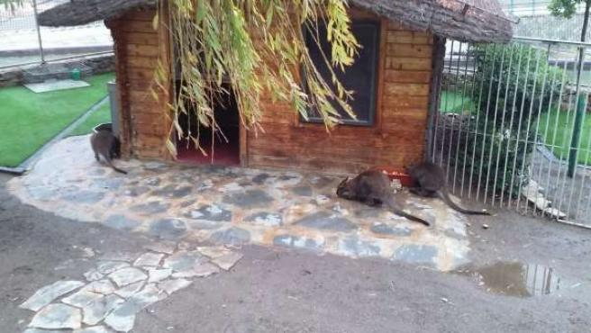 Parque del oeste málaga ahora maltrato ayuntamiento animal