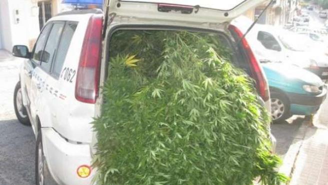 Marihuana intervenida en una de las actuaciones de la Guardia Civil en 2015.