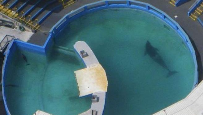 Imagen aérea del tanque en el que reside Lolita, la orca del Acuario de Miami.
