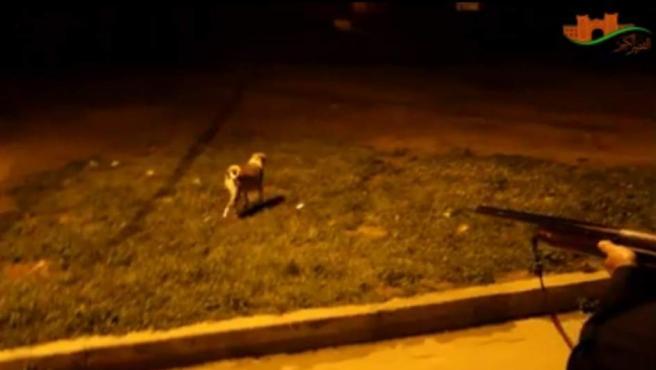 En Casablanca sacrifican entre 5.000 y 8.000 canes vagabundos.