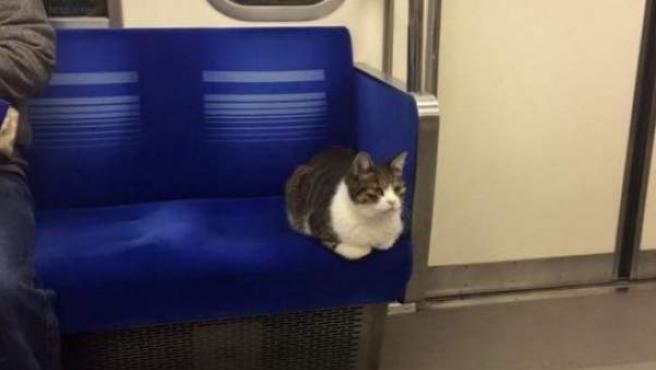 Imagen del gato que viaja a diario en una línea de tren japonesa.