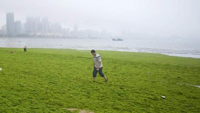 Un turista camina sobre algas acumuladas en la playa de Qingdao al este de la provincia de Shandong (China). Este alga llamada Enteromorpha prolifera y crece rápidamente y es arrastrada a tierra debido a las corrientes marítimas, causando incomodidades a los turistas en la época vacacional y una deficiencia de oxígeno para el medio marino de la zona.