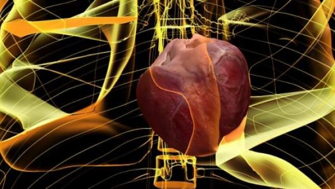 Simulación del funcionamiento de un corazón humano, según el proyecto Alya Red.
