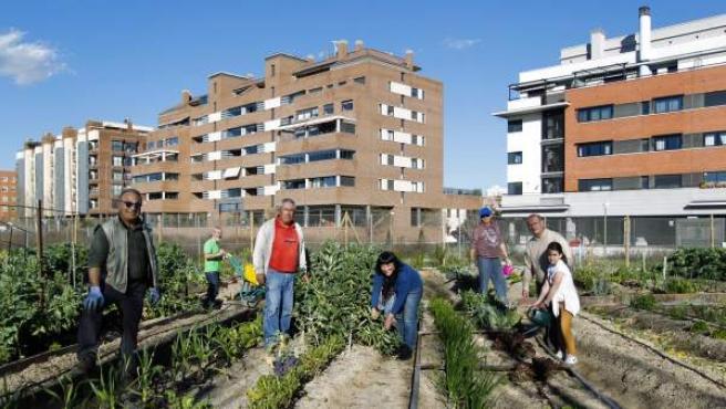 Miembros del Huerto Urbano de Montecarmelo (Madrid) trabajan en este espacio municipal gestionado por los propios vecinos de este barrio del norte de Madrid.