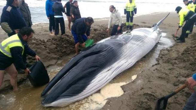 Cría de ballena hallada en Punta del Moral, en Ayamonte (Huelva).