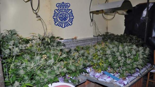 Invernadero de marihuana desmantelado en Ávila