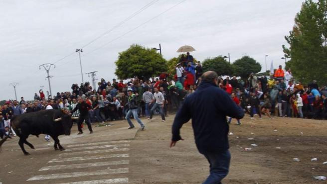 Rompe-suelas entra en escena en Tordesillas como principal protagonista del Toro de la Vega, mientras que los activistas antitaurinos mantienen la sentada en algunas partes del recorrido.