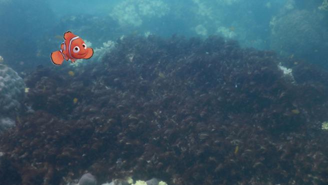 El cambio climático desahucia a Nemo