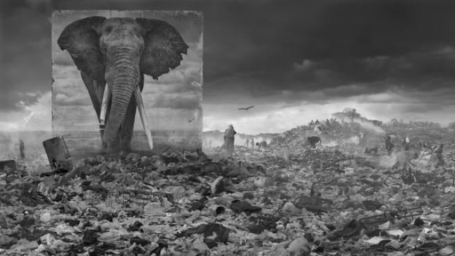 Elefante en un vertedero. De la serie 'Heredarás el polvo', del fotógrafo inglés Nick Brandt