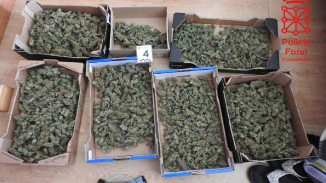 Marihuana incautada por la Policía Foral.