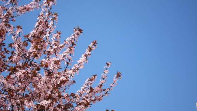 Árbol Con Flores, Primavera, Alergias, Buen Tiempo, Cielo Azul, Aire