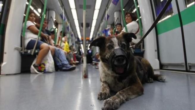 Los perros puede viajar desde el 6 de julio con correa corta y bozal, y en el último vagón.