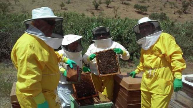 Apicultores de la empresa Bee Garden