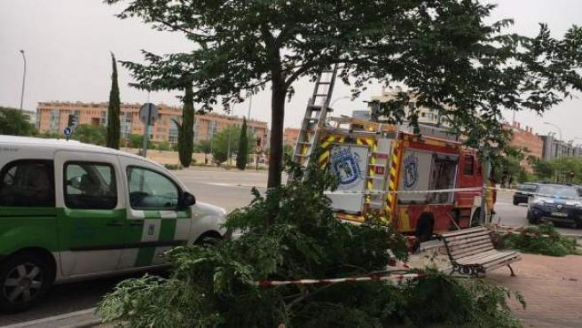 Caída de árbol en Ensache de Vallecas