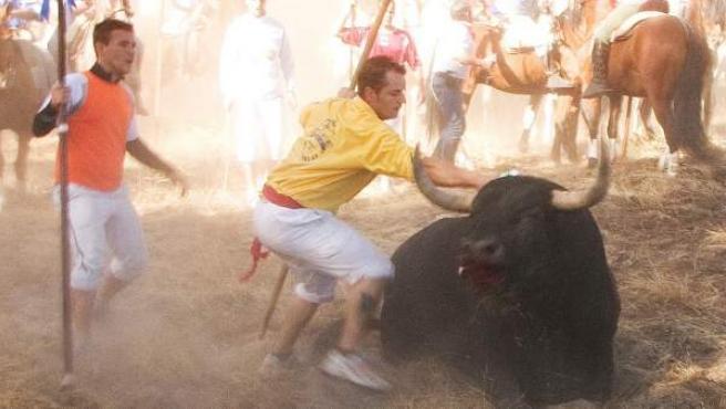 El torneo del Toro de La Vega del año 2015.