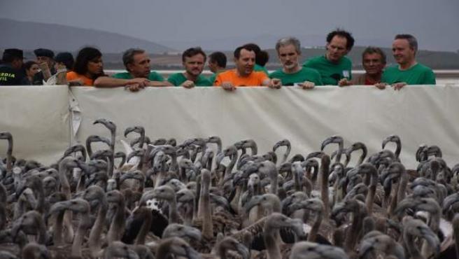 Consejero José Fiscal y Ruiz Espejo en anillamiento flamencos Fuente de Piedra
