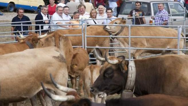 Feria ganadera Santiurde