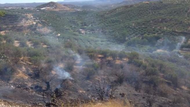 Parte de la superficie de olivar quemada por el incendio.