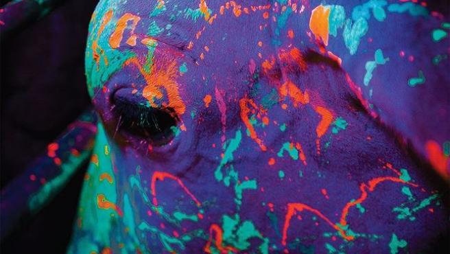 Boi neon (Toro de neón)
