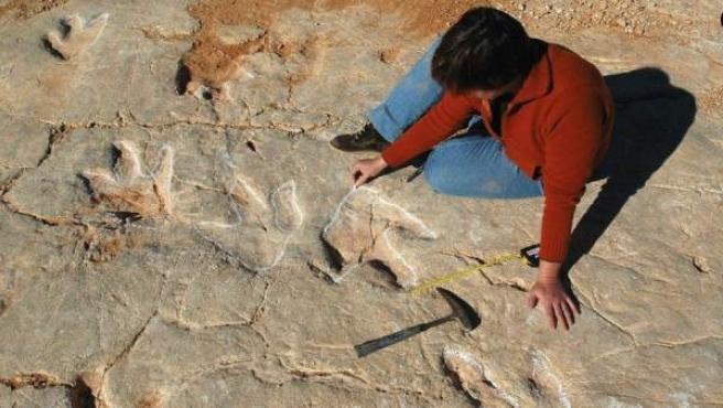 Hallan En Portugal 700 Huellas De Dinosaurios Las Mas Grandes De La Peninsula Según los expertos, las huellas fueron dejadas por al menos siete variedades de dinosaurios, que incluían a carnívoros y herbívoros de entre 50 tal vez, el hallazgo más impresionante en este sitio es que los deinonicosaurios, dinosaurios con plumas, vivían en grupos, a diferencia de lo que se creía. portugal 700 huellas de dinosaurios