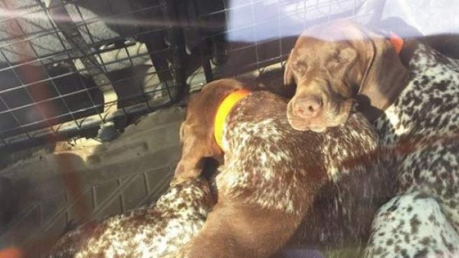 Los tres perros encerrados en un coche al sol que Julia Otero ha encontrado.