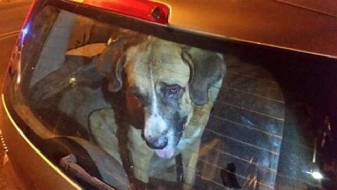 Perro encerrado en un coche en una imagen de archivo.