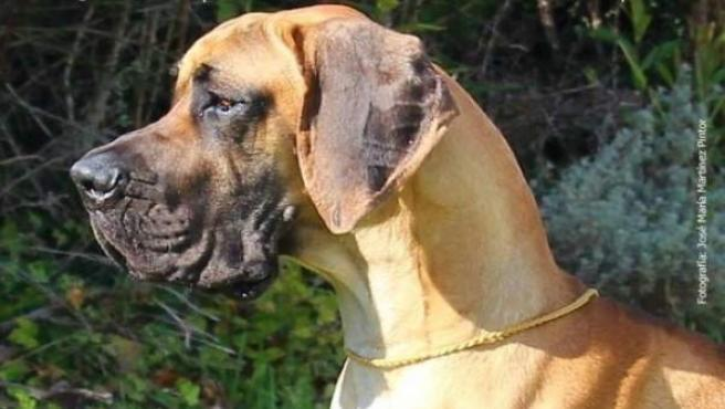 Más De 3.500 Perros Se Darán Cita En La Exposición Internacional Canina De Otoño