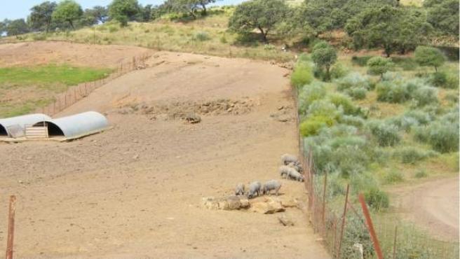 Imágenes del tronco fósil descubierto en Almadén.