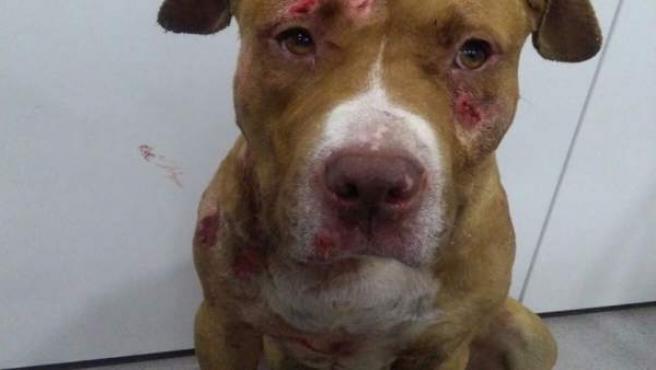 Detenidos en Jaca (Huesca) cinco organizadores de peleas de perros