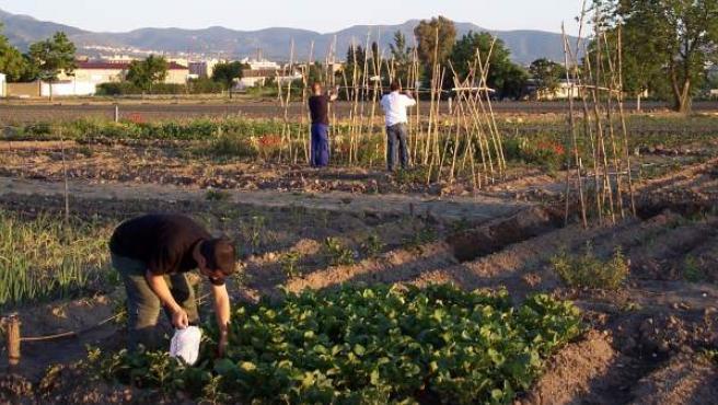 Un grupo de personas trabaja en un huerto urbano de Granada.