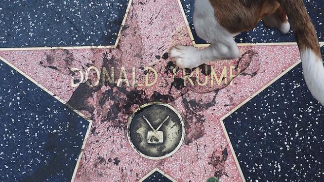 La evolución de la estrella de Donald Trump en el Paseo de la Fama de Hollywood