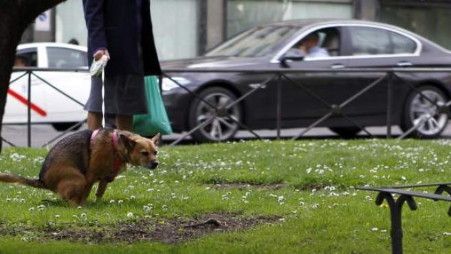 Imagen de un perro defecando en la vía pública.