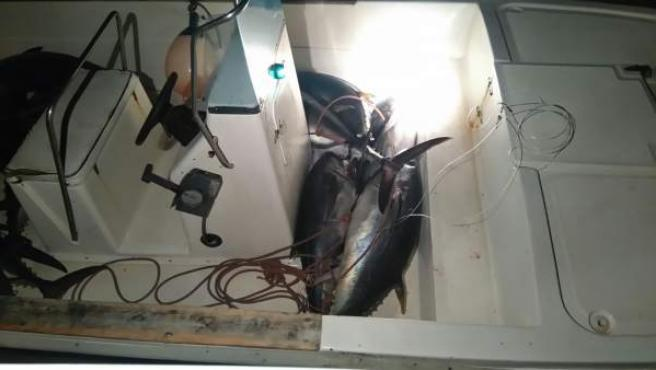 Piezas de atún rojo intervenidas