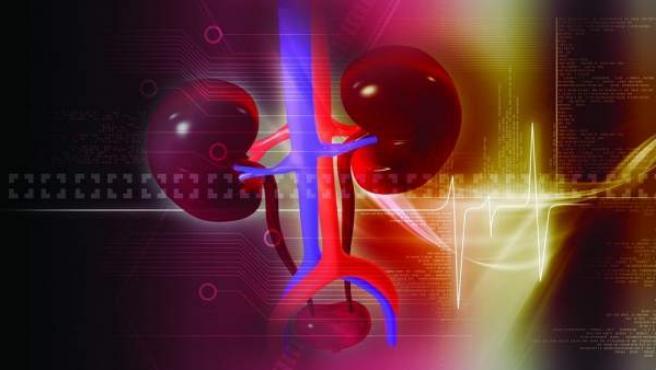 Imagen de archivo de unos riñones.