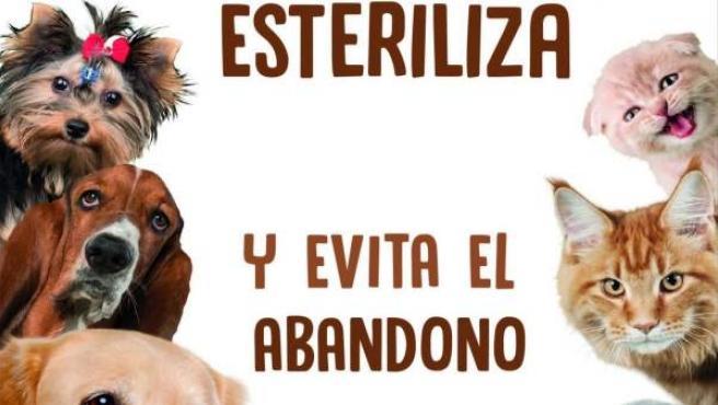 Imagen de la campaña de esterilización