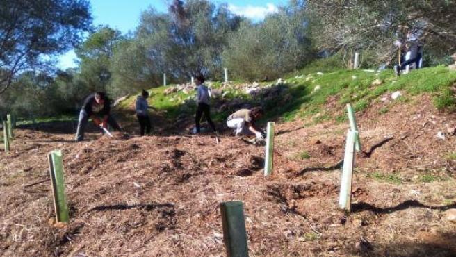 Reforestación en Mondragó
