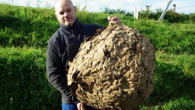 Lolo Andrade posa con un nideo gigante de avispa en la localidad coruñesa de Coirós.