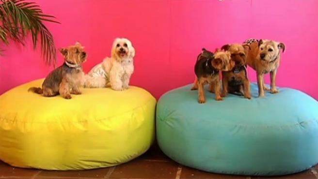 Un hotel 5 estrellas para mascotas