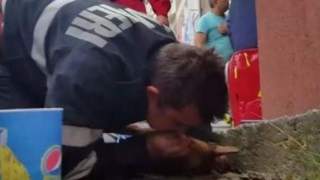 Bombero rumano haciendo el boca a boca a un perro tras un incendio.