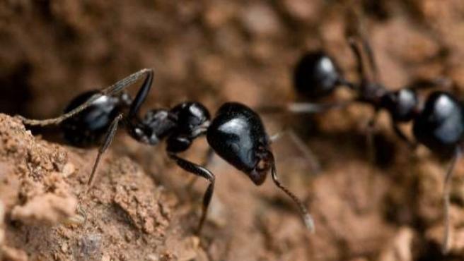Imagen de archivo de dos hormigas.
