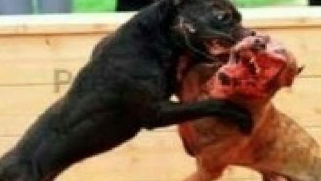 Animales malheridos