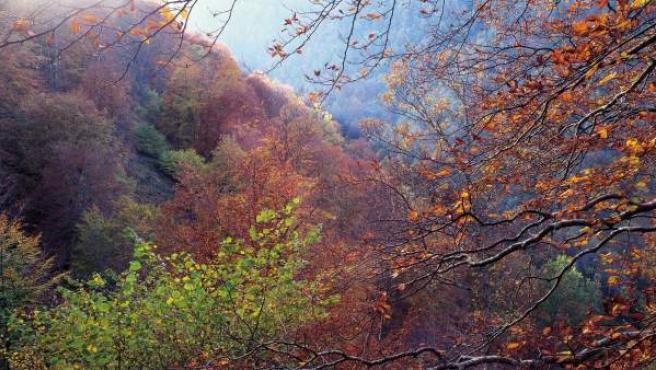 Un bosque en otoño.