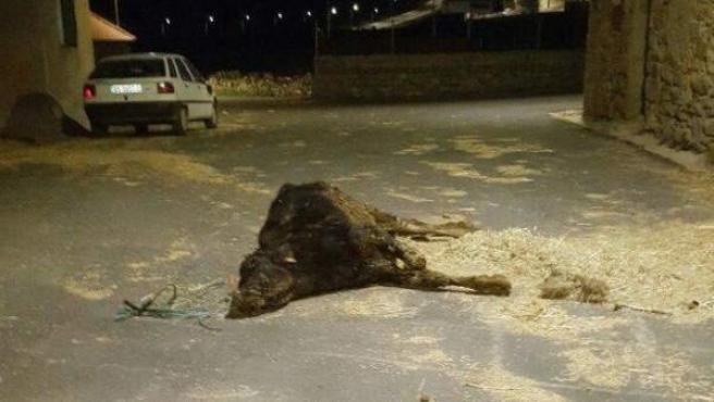 El ternero al que dejaron agonizando en la calle en plena ola de frío en Ávila.