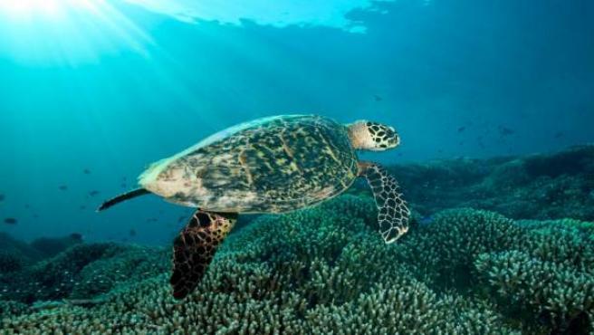 Una tortuga en las profundidades del océano.