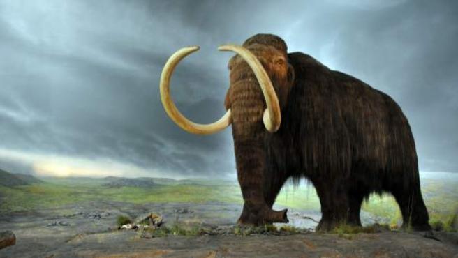 Reproducción de un mamut lanudo.