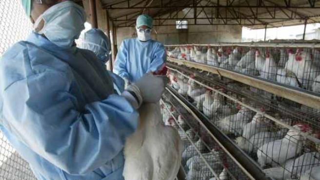 En octubre de 2005 se confirmó el primer caso de H5N1 en la Unión Europea (un loro en cuarentena en Gran Bretaña) y pocos días después también en Croacia (en cisnes). En febrero de 2006 la gripe aviaria se extendió por Italia, Grecia, Austria, Alemania, Hungría, Eslovaquia, Eslovenia y Francia. En julio de 2006 fue confirmado el primer caso de gripe aviar en España.
