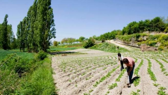 Agricultores trabajando en el campo.