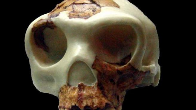 Reconstrucción del cráneo de 'Homo antecessor' a partir de los fragmentos hallados